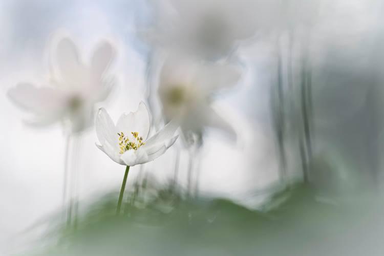 Makrofotografie-Blume